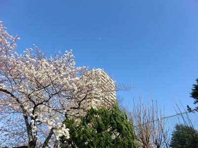 川沿いの花見.jpg